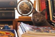 My Bookstore / by MJ Kooshball