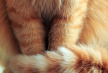 Katter vi gillar / Det finns många fina bilder på söta katter på Internet. Här har vi samlat några som vi gillar :-)  / by Hemmets Journal