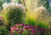 Drought Tolerant Plants / by Mimi Kent