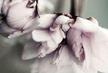 Lady of the flowers. / Flowers make me happy. End!  / by Fabiola {Jade Noir}