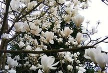 Garden 2 / A  beautiful garden is paradise on earth! / by Nikki hill