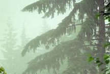PNW (Pacific Northwest) / Inspiration from the Pacific Northwest / by Alanna Frick