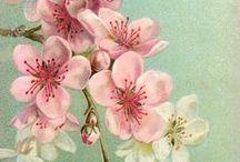 Colour Story | Cherry Blossom