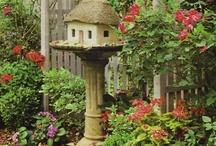 My secret garden / by Tina Dobbs