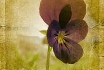 Pretty / by Jennifer Collins Skelly