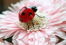 lady bugs for Tinabug