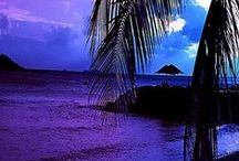 PALM TREE~TROPICAL DESIGN / by Hiedi Rollings-Sauley