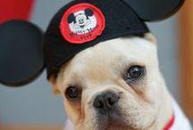 Disney Pets / by Disney Sisters
