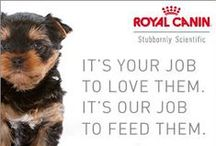 Learn More About Royal Canin