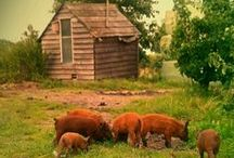 wHeN pigS fLy coUntRy*cottage / by **** Donna ****