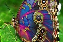 Dragonflies and butterflies