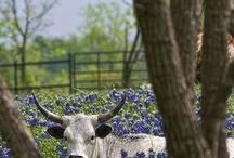 Deep in the Heart of Texas / by Pat Nies
