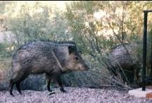 Southern Arizona / A photo journal of critters and such that I have seen on my hikes.