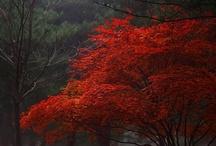 Autumn / by Connie Paribello
