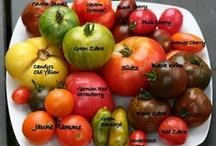 MI vegetable gardening / by Holly