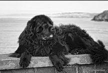 Dogs | Kutyák | Hunde / Dogs | Kutyák | Hunde