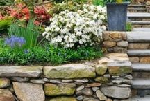 Landscaping & Backyard / Ideas for our home and future garden