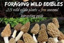 Foraging / Foraging for Food and other medicinal foods.  Edible herbs, mushrooms more.  Living off the grid.  How to Forage. What is Edible. It's a natural!