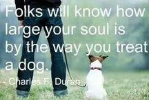Koirat- dogs ♥