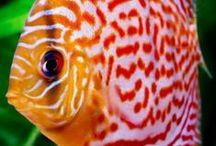 Fish...Beautiful Fish / Rare and unusual fish and beautiful ocean creatures. Patterns in fish. Art of nature.