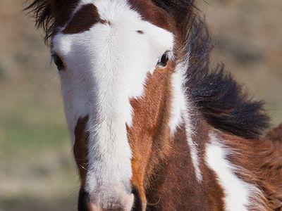 Unusual Horse Markings On Pinterest Appaloosa