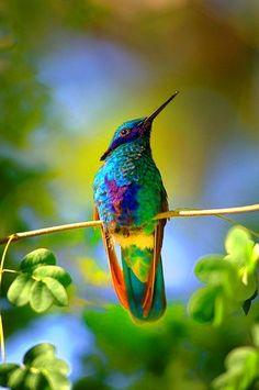 What a gorgeous hummingbird!