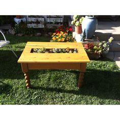 Repurposed succulent coffee table