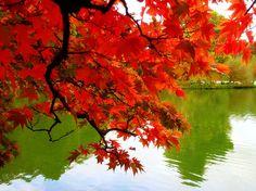 an autumn look