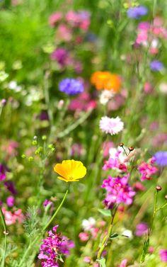 Critter-, bug-, bee- and bird-friendly wildflower garden.