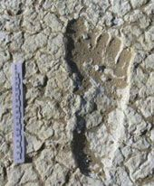 Fossil human footprints found in Australia. Date to 20,000 years old...