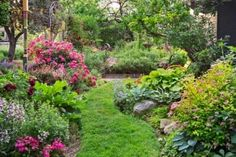 A grassy path meanders between perennial beds in this urban garden. See the rest of it here.