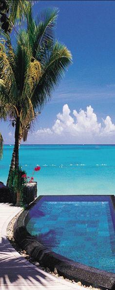 Royal Palm.Mauritius