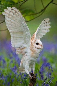 ~!~owl