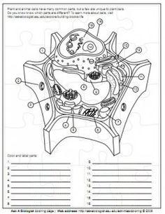 blank microscope diagram blank free engine image for user manual download. Black Bedroom Furniture Sets. Home Design Ideas
