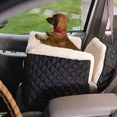 Lookout Pet Seat, Mister LOVES his and it keeps him safe.