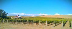 Napa Valley in October #carneros