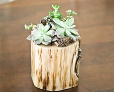 Hollowed-out cedar planter - the blogger says it was easy! - I have some large cedar branches too - want to remember to try this - #Branch #Crafts #Planter - pb†å