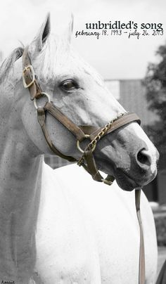 Tapit Thoroughbred Racehorse And One Of The Top Studs In