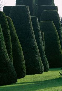 PACKWOOD HOUSE, WARWICKSHIRE: THE TOPIARY GARDEN IN WINTER