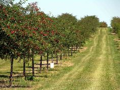 One of many cherry orchards in Door County Wisconsin