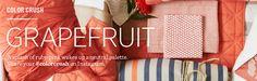 Grapefruit | west elm
