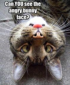 Angry bunny face...:-)