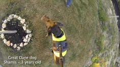 GoPro - 3rd Dog View mount testing