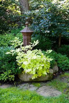 Golden bleeding heart has chartreuse leaves that brighten the scene around a Japanese pillar placed at the juncture where this side path leads to the front yard.