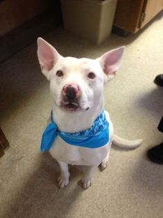 Share pledge snow begging for foster kern county animal