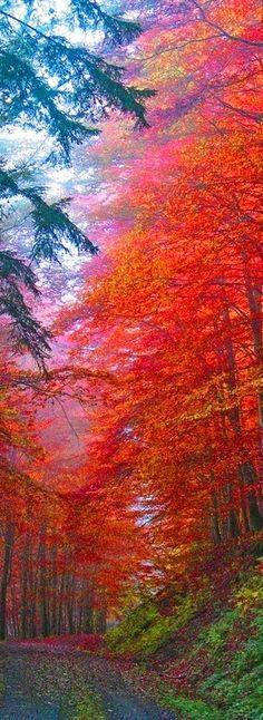 Autumn Splendor      ᘡղbᘠ