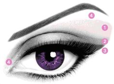 Anatomy of the Eye Makeup Version. 1) LIGHTEST SHADE - Apply as a base on the entire eyelid including the brow bone but avoid going all the way to the eyebrow.     2) MEDIUM SHADE - Sweep over the middle of the eyelid and blur it toward the outer edge of the eye.   3) DARKEST SHADE - Apply along the base of the lashes with a beveled precision applicator.   4) HIGHLIGHTER / ILLUMINATOR SHADE - Apply to the inner corner of the eye and below the eyebrow for a finishing touch.