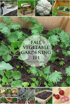 Fall is on its way! Learn how to get started with cold weather vegetable growing with these great tips!