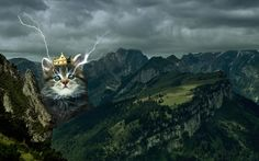 epic kitten wallpaper