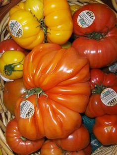 Tomato trivia, your health, and George Clooney. Read the blog post here http://www.vegetablegardener.com/item/8014/tomato-trivia-your-health-and-george-clooney